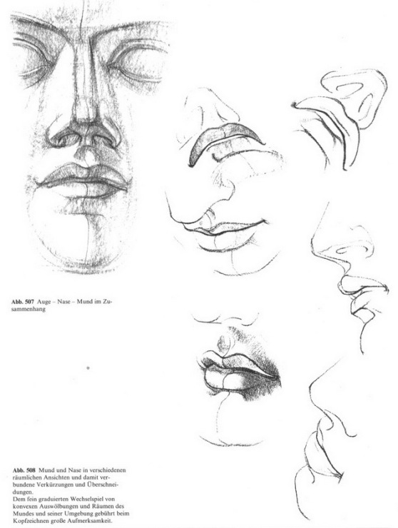 Пластическая анатомия человека для художников баммес